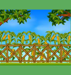 Green corn field in agricultural garden vector