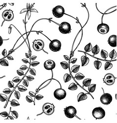 hand drawn cranberry background wild berries vector image