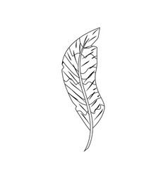 Line beauty feather style with decoration design vector