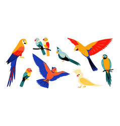 parrots colorful cartoon tropical birds flying vector image