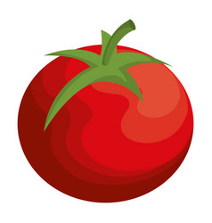 tomato vegetable healthy food vector image