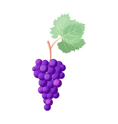 wine grapes icon on white vector image