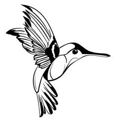 hand drawn tattoo sketch colibri drawing vector image
