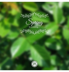 Blurred spring background with branch and green vector image vector image