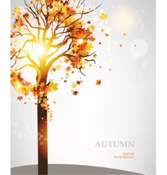 Autumn tree with beautiful leaves vector image
