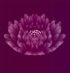 Beautiful flower on purple pink background vector