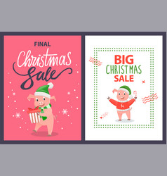 big and final christmas sale poster pig vector image