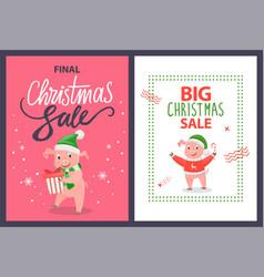 big and final christmas sale poster pig vector image