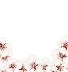 Bstract Border Made in Sakura Flowers Blossom vector