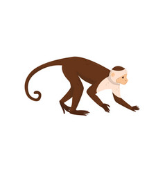 Flat icon of brown capuchin side view vector