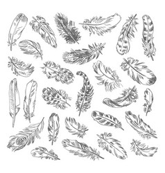 Freehand drawing quill vector