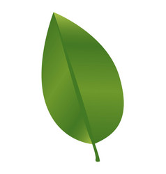 Green leaf with branch nature icon vector