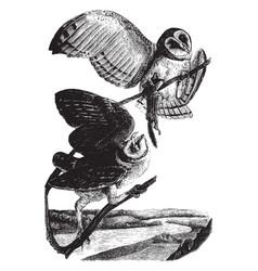 American barn owl vintage vector