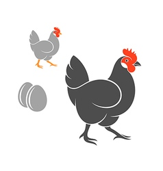 Two hens with eggs vector