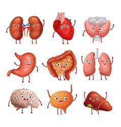 Cute cartoon human organs stomach lungs vector