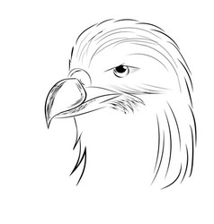 Eagle drawn by hand contour of a bird vector
