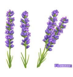 Lavender flowers 3d realistic set vector