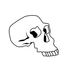 Skull human structure anatomy bone icon vector
