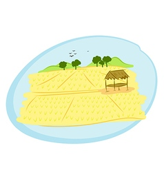 thai rice field vector image
