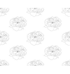 peony on white background vector image vector image