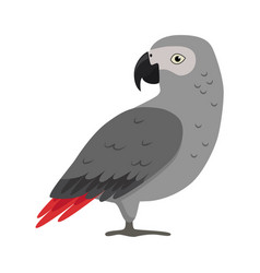 African grey parrot silhouette icon in flat style vector