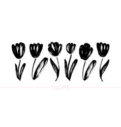 collection hand drawn graphic tulips vector image
