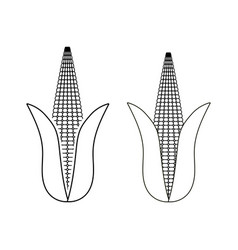 Ear corn maize line art on a transparent vector