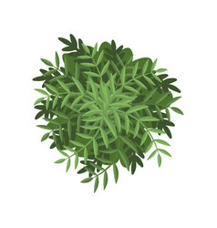 Green bush landscape design element top view vector