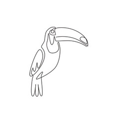 one single line drawing exotic toucan bird vector image