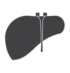 liver icon vector image