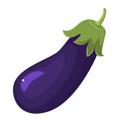 Eggplant isolated on white aubergine vegetarian vector