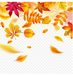 falling autumn leaves flying yellow fall foliage vector image
