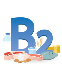 foods rich in vitamin b2 vector image
