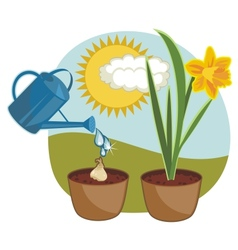 Growing daffodil vector