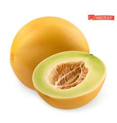 Melon fresh fruits 3d realistic vector
