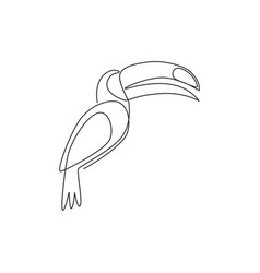 one continuous line drawing cute toucan bird vector image