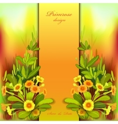 Orange yellow primroses vector image