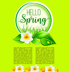 Spring holiday greeting poster of dafodil flowers vector