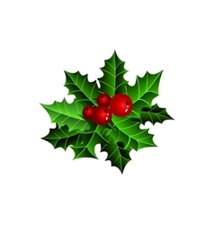 Twig of holly with berry and leaves vector image