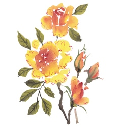 Watercolor flowers Roses vector image vector image