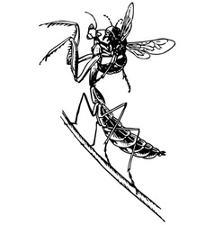 wasp attaking mantis vector image vector image
