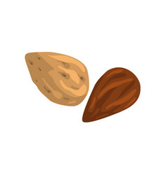 almond nut nutritious natural product vector image