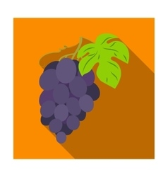 Bunch of grapes icon in flat style isolated on vector image