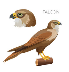 Falcone with bright green eyes head and bird vector