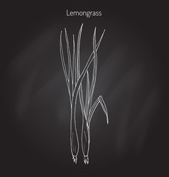 Lemongrass medicinal plant vector