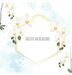 minimal flat style white phalaenopsis orchid vector image