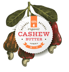 cashew butter emblem over hand drawn nuts branch vector image vector image
