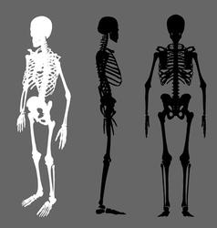 skeleton silhouette vector image vector image