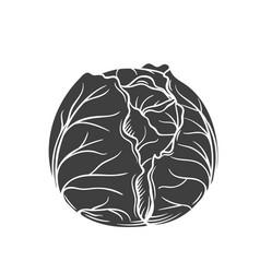Cabbage glyph icon vector