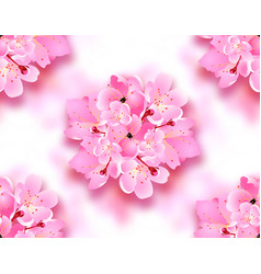 decorative flowers of sakura cherry blossoms vector image